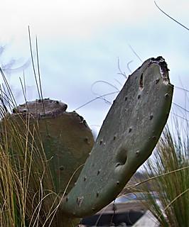 2012 - Day 9 - Cacti