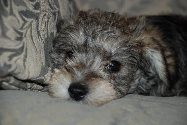 1-13-07 puppy 039
