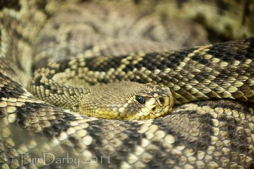 2011-12-26 - Zoo-552