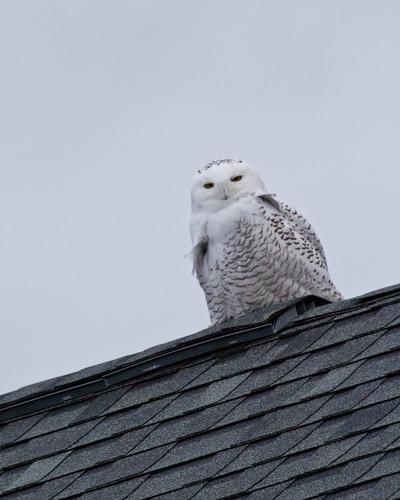 Owl Post?
