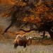 Inner Mongolia by Khun_K