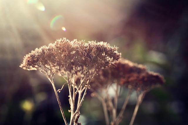 sunbeam in winter