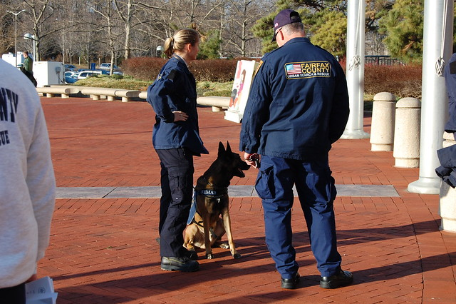 Image Result For Fairfax County Dog