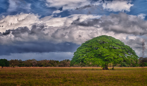 tree landscape costarica