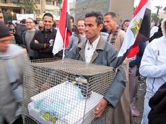 Mubarak in Cage - مبارك العميل في القفص
