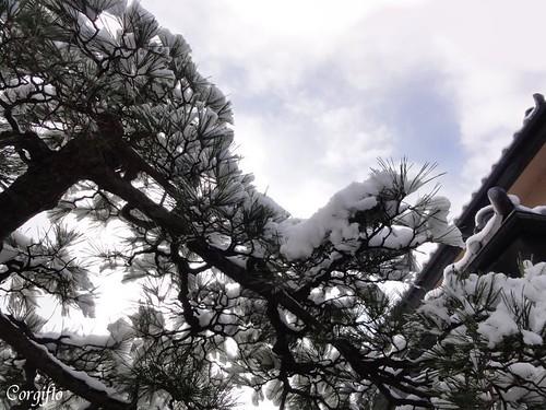 aBLOGjardin-120122-neige1