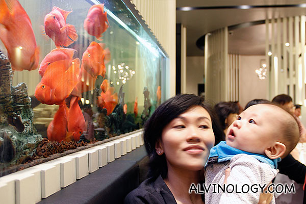 Asher loves to look at fishes