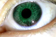 iris, skin, macro photography, eyelash, green, close-up, eye, organ,