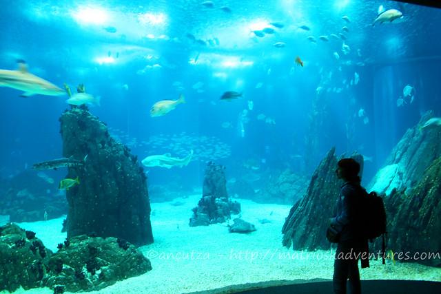 foto acquario Lisbona Portogallo