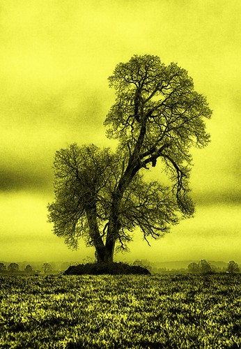 tree silhouette oregon landscape island colorful outline 1001nights stately sauvie