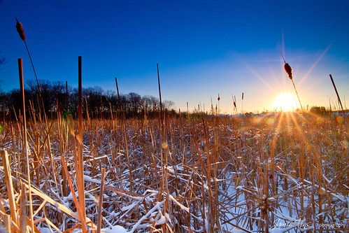 blue winter orange snow ice colors sunrise canon sigma cattails swamp flare sunburst marsh hoya singray 5dmarkii 5dm2 jamieivins jamieivinsphotography
