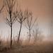 fog by Luca Cavallini