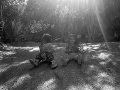 Sunshine (black and white)