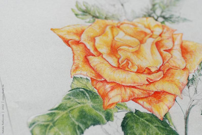 My pastel drawings, detail