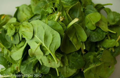 Uttapam_Spinach.jpg
