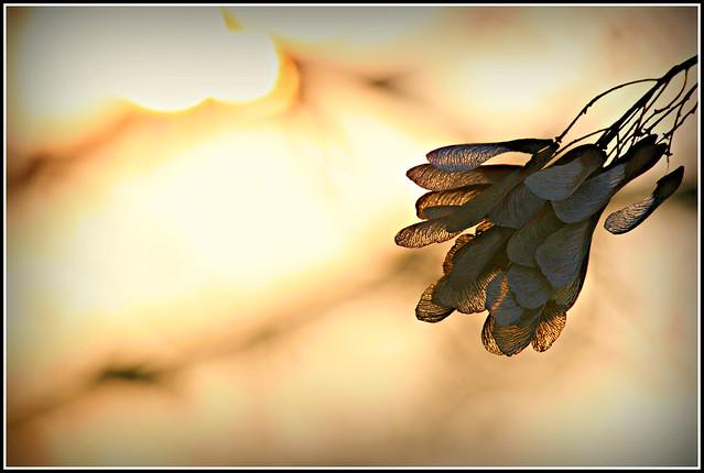 Sun-lit