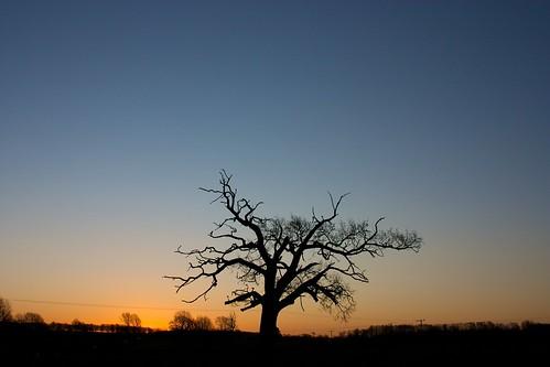 winter sky sunrise alba cielo simple
