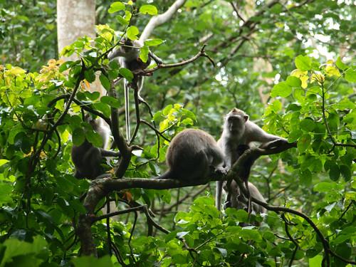 бали, обезьяны11