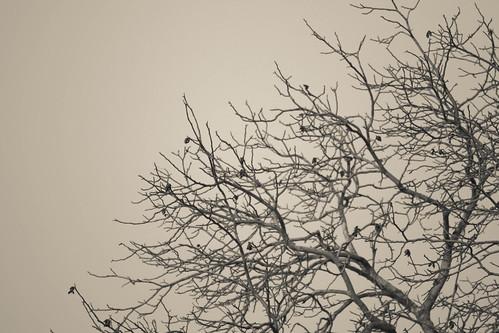 Grim Tree