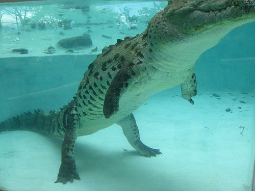 sobek crocodile