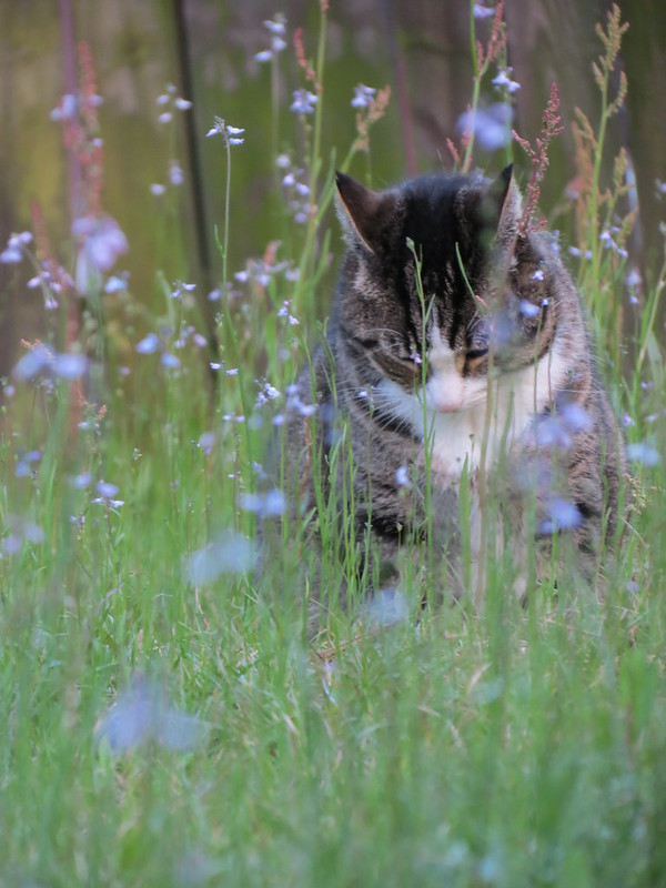 """'Cho just for fun -  """"Ferdinand and the Flowers"""""""