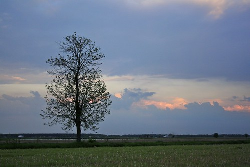 sunset sky cloud tree scenery day cloudy poland