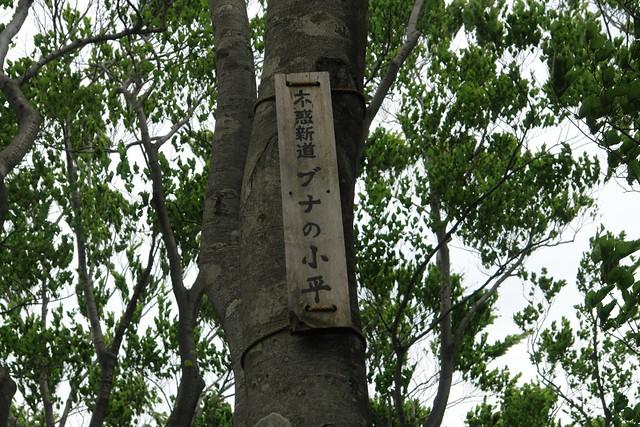 """Walk """"HUWAKU SHINDOU"""""""