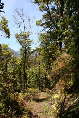 Otaki Fenceline walk