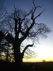 CIMG6089 Hollow Trunk Tree