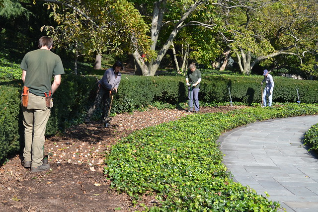The beds along Magnolia Plaza will become a frenzy of color come spring. Photo by Elizabeth Peters.