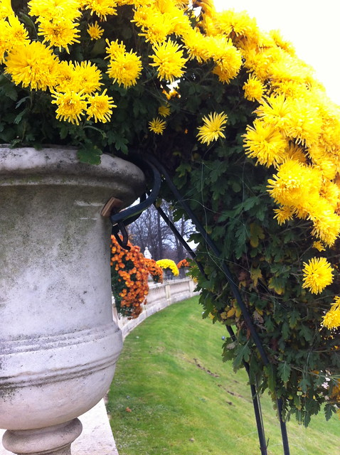 Luxembourg Flowers