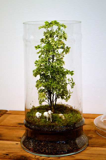 One of the terrarium landscapes designed by Jennifer Williams, on display in BBG's Steinhardt conservatory. Photo by Elizabeth Peters.