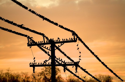 sunset birds wire post telephone