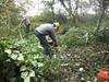 Coppicing 29-10-11 8