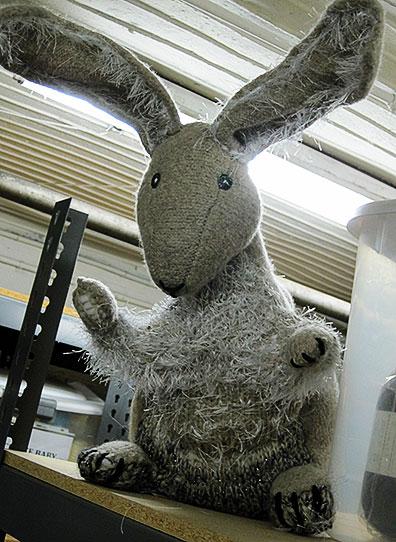 Basement Bunny