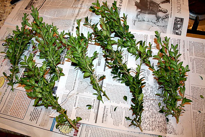 Boxwood Wreath 004