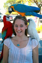 Holly and Parrots