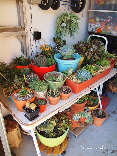 Hibernating Succulents