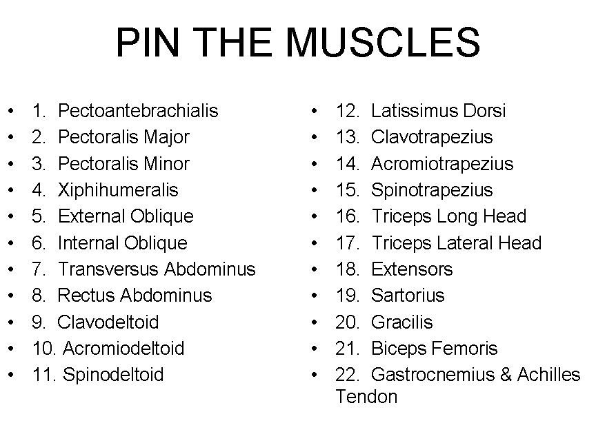 Pin The Muscles List