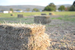 prairie, agriculture, straw, hay, field, grass, plant, harvest,