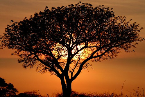 Smile of the Sun - Madikwe Game Reserve, South Africa