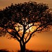 Smile of the Sun - Madikwe Game Reserve, South Africa by Stefano Gambassi