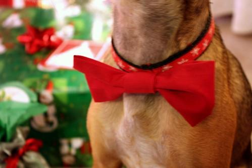 dog-bow-tie