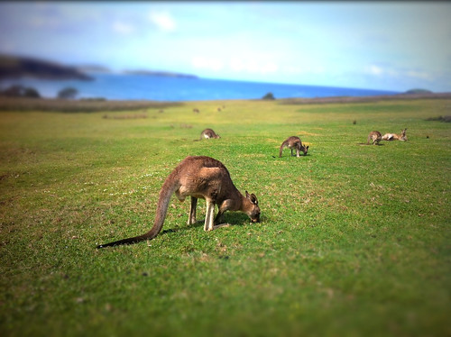 Hangin at the beach with the Roos