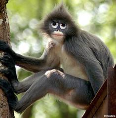 chimpanzee(0.0), tufted capuchin(0.0), capuchin monkey(0.0), langur(0.0), white-headed capuchin(0.0), macaque(0.0), ape(0.0), animal(1.0), monkey(1.0), mammal(1.0), fauna(1.0), spider monkey(1.0), old world monkey(1.0), new world monkey(1.0), wildlife(1.0),