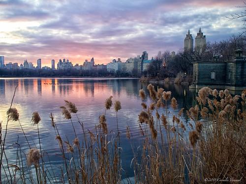 nyc newyorkcity newyork pen centralpark sunsets olympus reservoir happynewyear olympusep1 mzuiko17mmf28