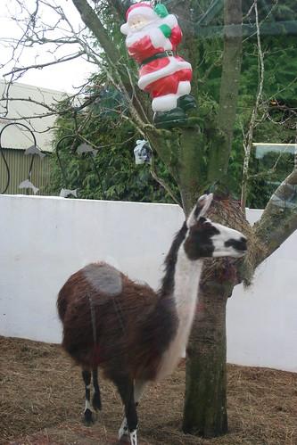 29th December 2011