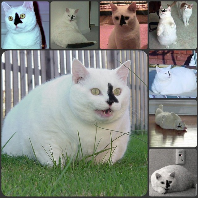Tubby Collage