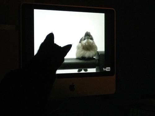 NELL WATCHES THE YOUTUBE BIRDIE