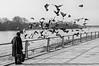 Taubenfütterung mit Vorsatz by Bluespete